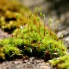 moss on the path